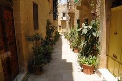 Plants in the streets of Vittoriosa Birgu
