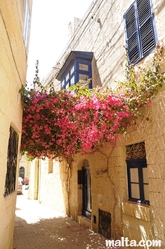 Buganvilla in a small street of Birkirkara