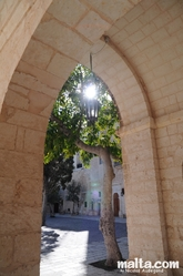 Tree in the court of the mellieha parish church