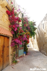 narrow street of Tarxien