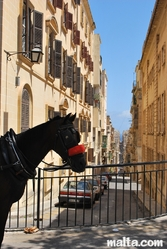 A horse in the street of Valletta