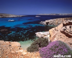 The blue lagoon of comino