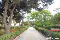 Path and trees of the Argotti Botanical park in Floriana