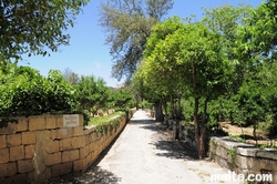 Path between the citrus trees in the Buskett Gardens