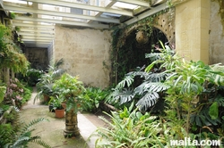 inside the greenhouse of the palazzo parisio garden
