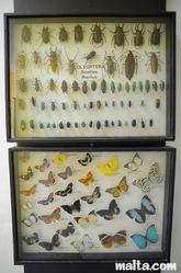 beatles and butterflies at the National Museum of Natural History