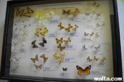 pretty butterflies at the National Museum of Natural History