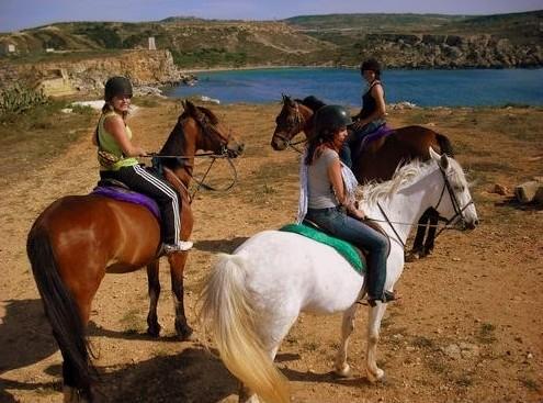 Golden Bay Horse Labels