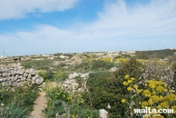 Fields in dingli
