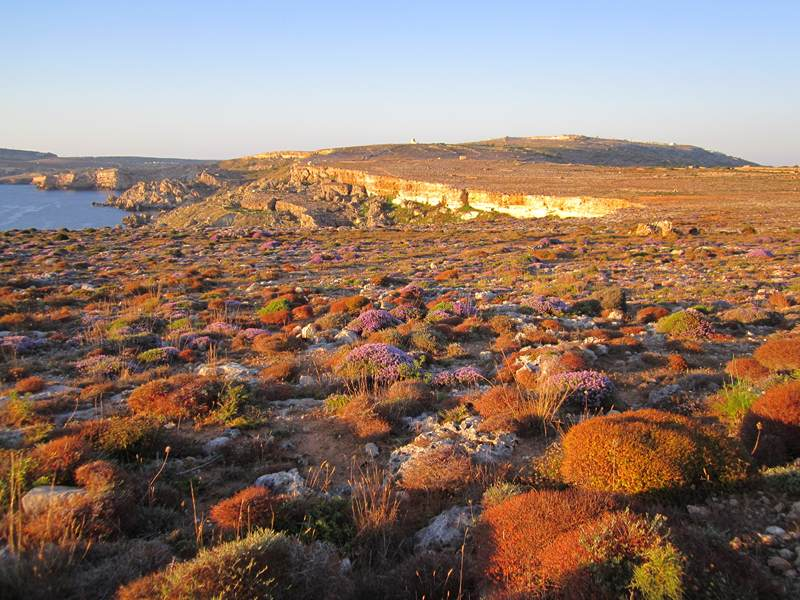 Il Majjistral Nature Amp History Park Malta Natural Sites