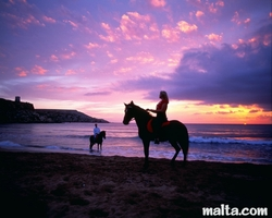 horse riding in golden Bay